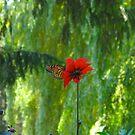 Summer Monarch by MarianBendeth