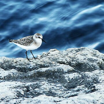 Sand Piper by beemer91