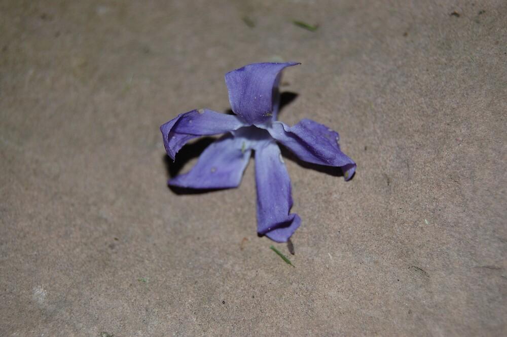 Purple Fading Flower by atmbroke