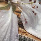 White Flower by Megan Stone