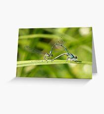 Mating Damselflies Greeting Card
