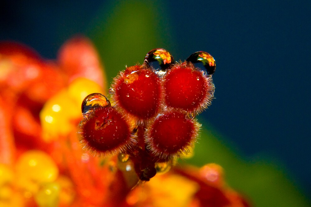 hibiscus macro by jpghouse