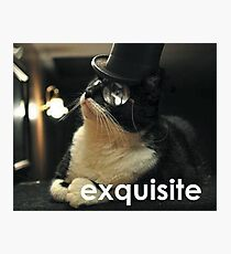 Exquisite Cat Photographic Print