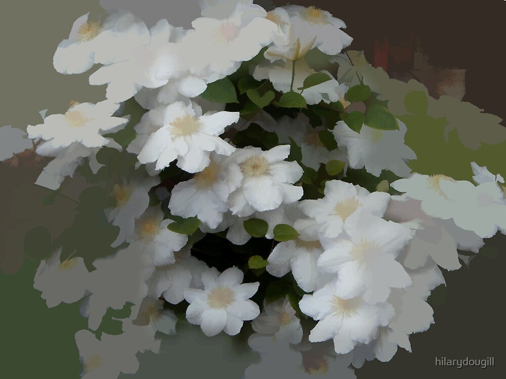 abstract of white clematis by hilarydougill