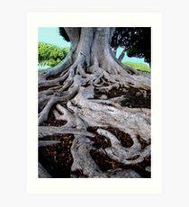 Winding Roots Art Print
