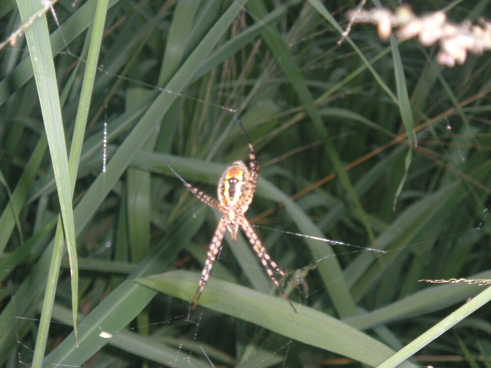 spider at ease by mpzani