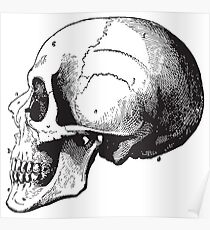 Human Anatomy Drawing: Skull Right Side View Poster