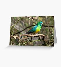 Red Rumped Parrot Greeting Card