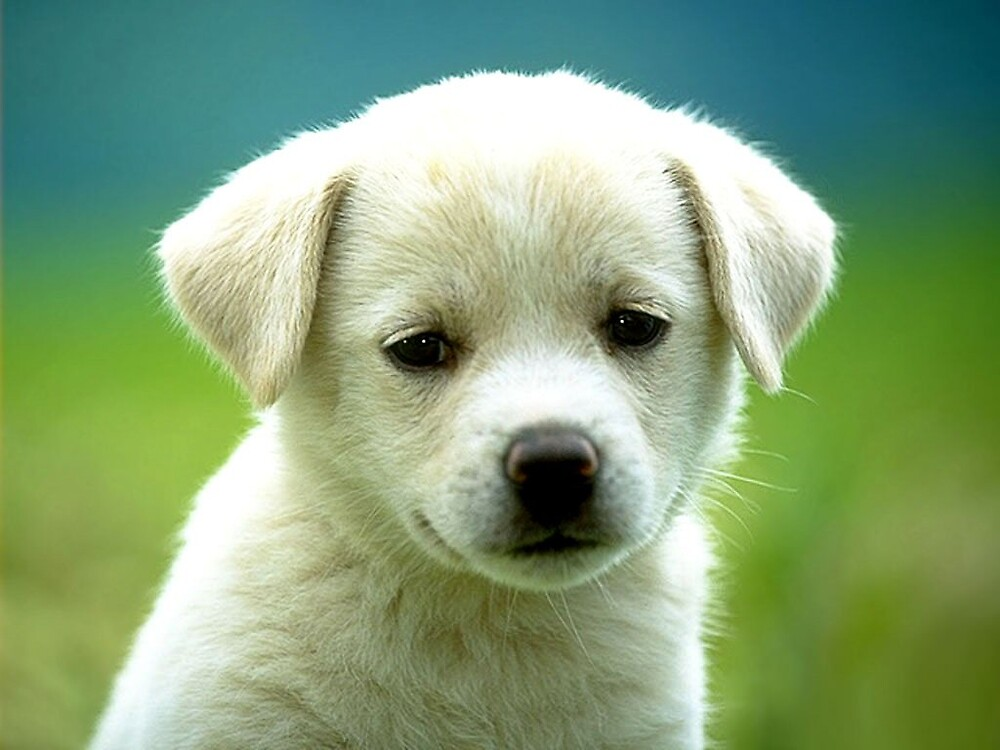 Puppy by Terit