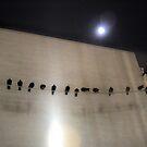 Night birds by Ameliashaw