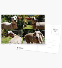 Dakota  Postcards