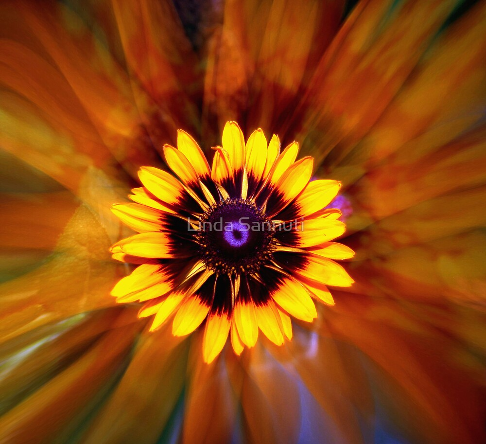 flower crazy by Linda Sannuti
