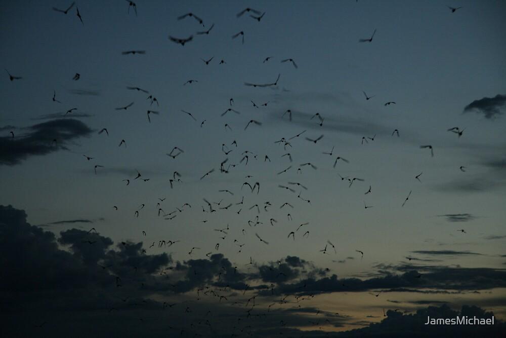 Bats by JamesMichael