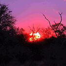 TYPICAL AFRICAN SUNSET von Magriet Meintjes