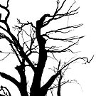 Dead Tree by MagnusAgren
