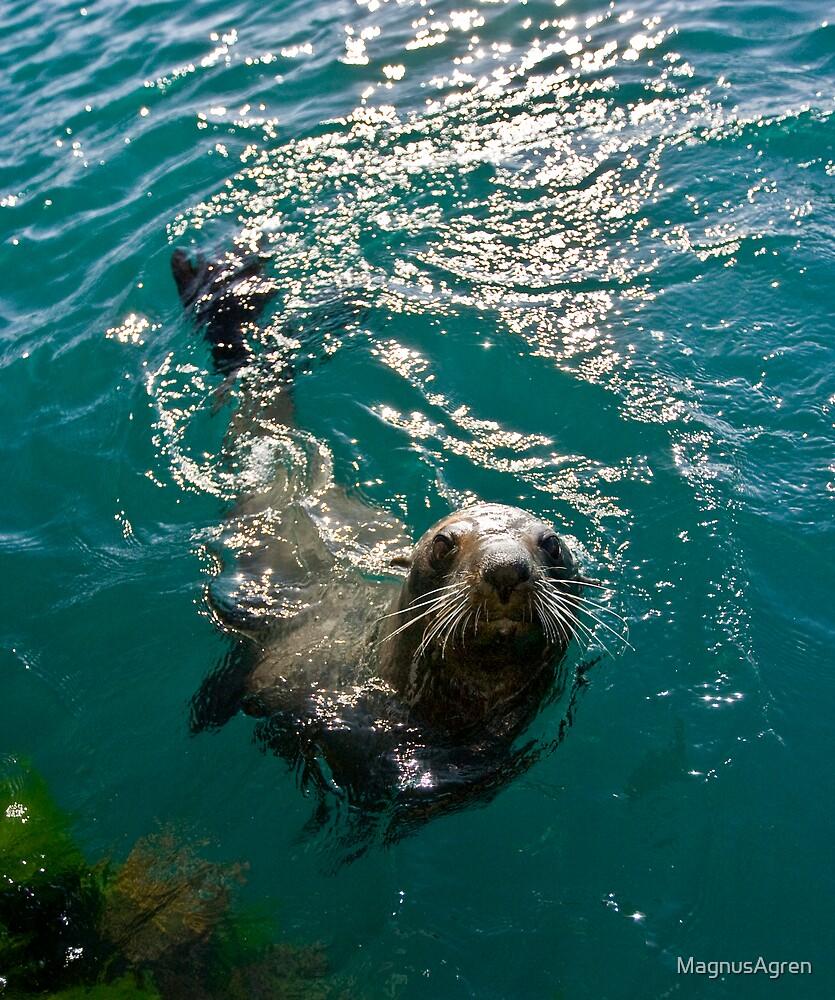 Questioning Seal by MagnusAgren