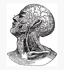 Human Anatomy Drawing: Head Veins, Nerves, Nerve Endings Photographic Print