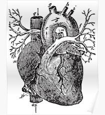 Human Anatomy Drawing: Heart Veins, Arteries Poster