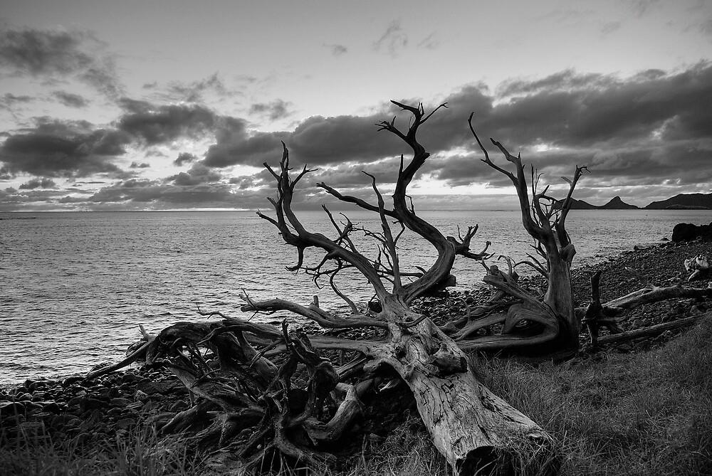 Dead Tree Lord Howe Island by Geoffrey Chang