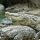 Croc-o-pile by Tony Hadfield