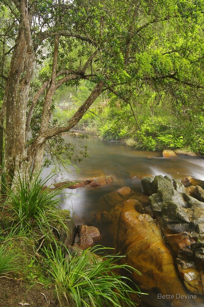 Brodribb River #2 by Bette Devine