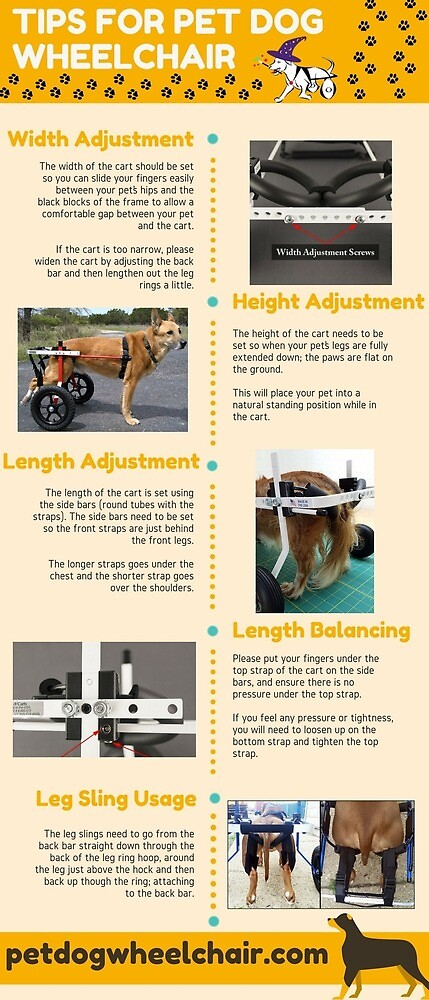 Tips for Pet Dog Wheelchair by wareenmc