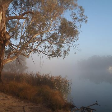River Red Gum on a misty morning by HaniaAnia