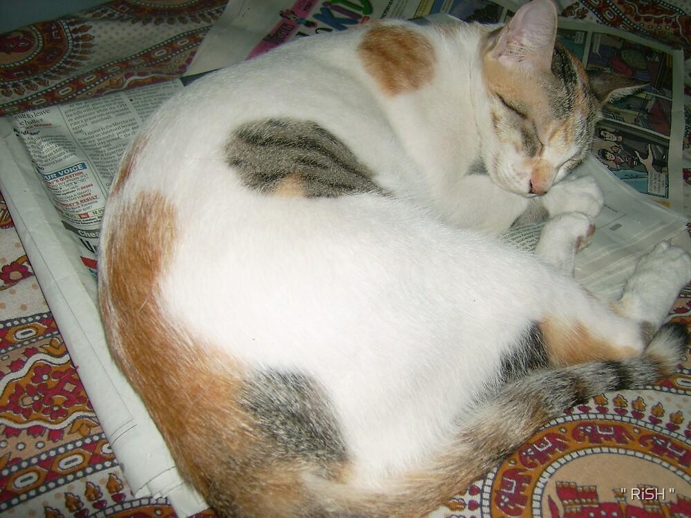 "Illiterate Cat by "" RiSH """