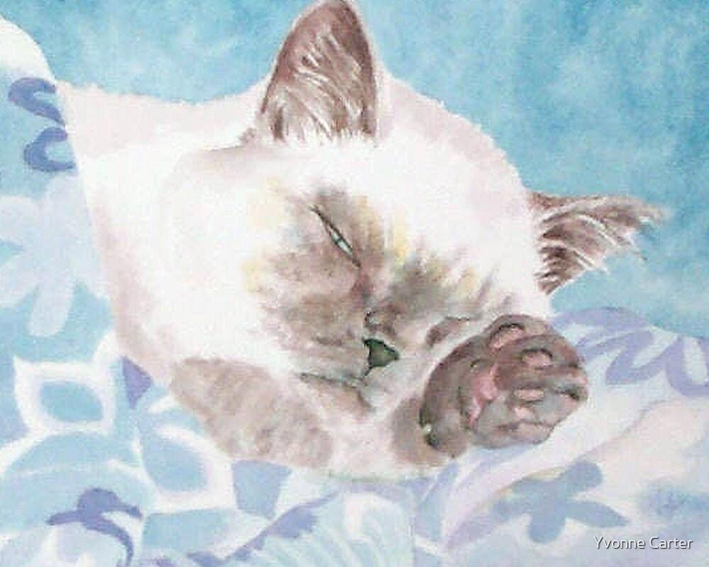 Sleepy Sealpoint Siamese Cat by Yvonne Carter