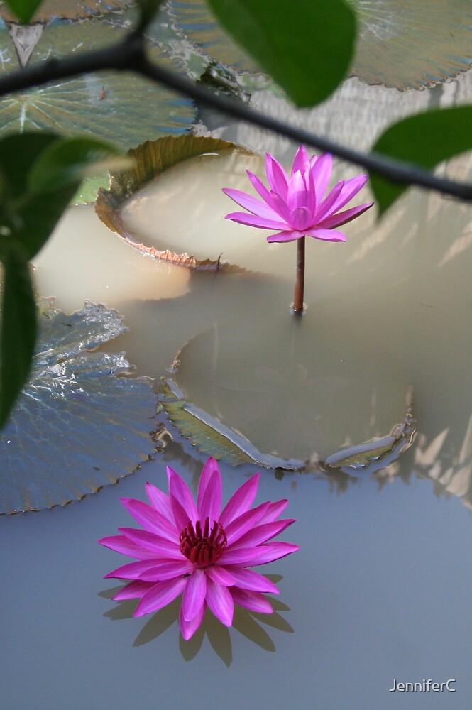 Lotus Flower by JenniferC