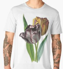 Tulips With Variegated Petals Vector Men's Premium T-Shirt