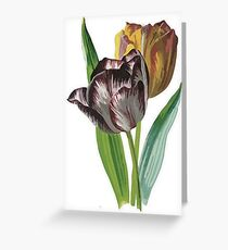 Tulips With Variegated Petals Vector Greeting Card