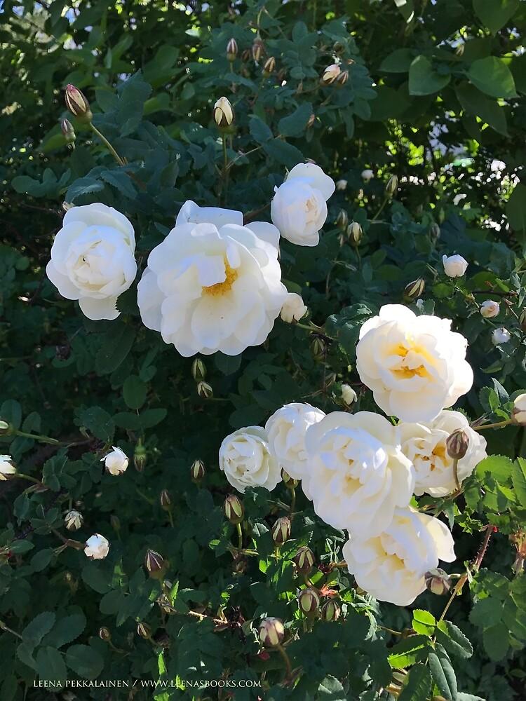 Pure White Roses by Leenasart