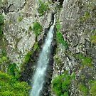 Lyrebird Falls by Penny Smith