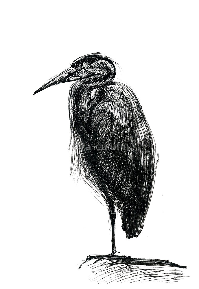 Heron. Looking left. by kira-culufin