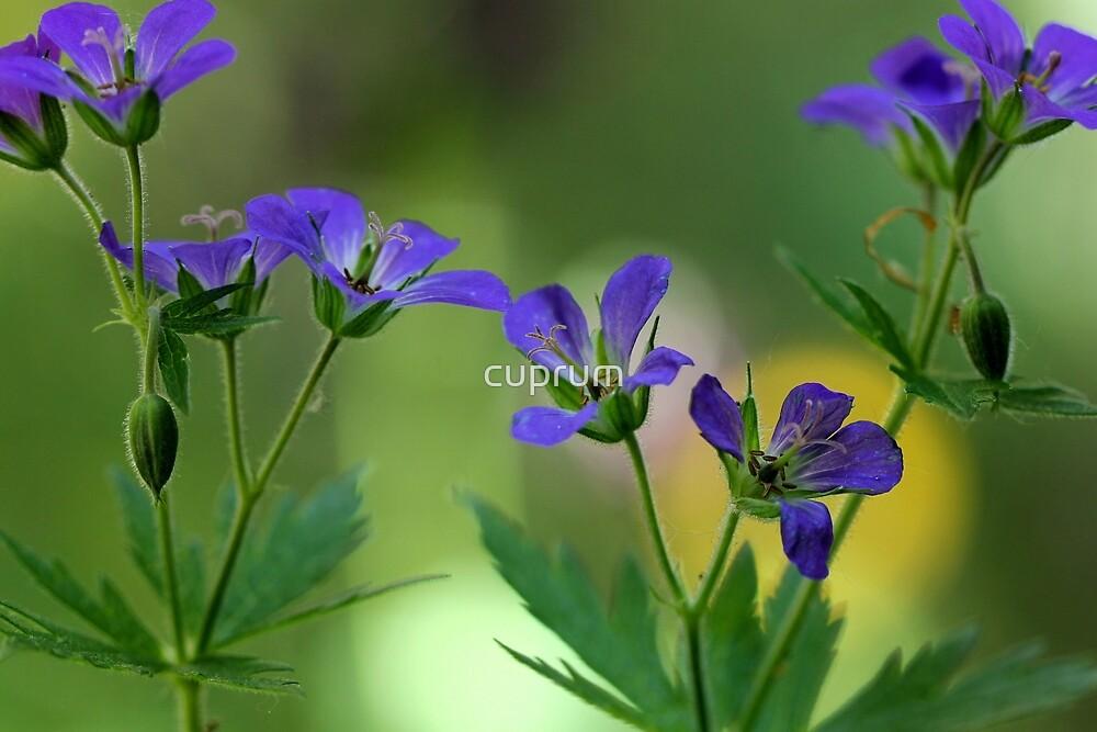 Pretty in Blue by cuprum