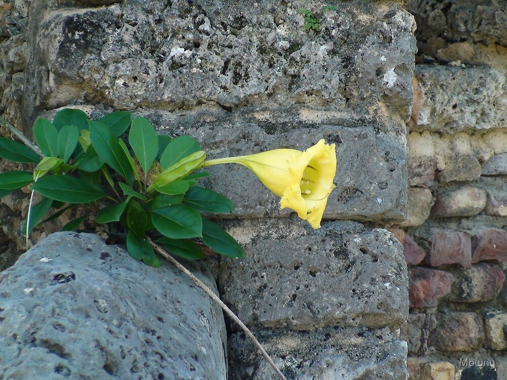 Yellow Tropical Flower Trumpet Shaped by Mowny