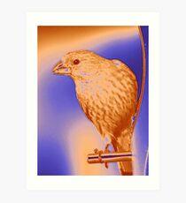 Finch - Silkscreen Art Print