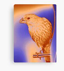 Finch - Silkscreen Canvas Print