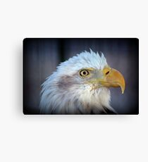Fontana Eagle Portrait 2 Canvas Print
