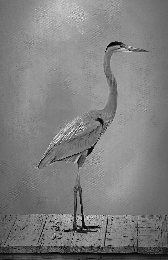 Standing Tall 3 by HHPhotographyFL