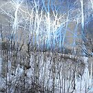 These Wintry Trees by Robin King