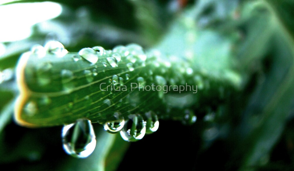 drops of GOD by CriGa Photography