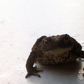 Frog on the beach Part 2 von Mows