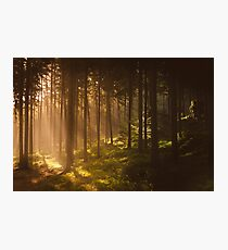 Morning forest Photographic Print