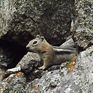 Chipmunk, Durango, Colorado by lenspiro