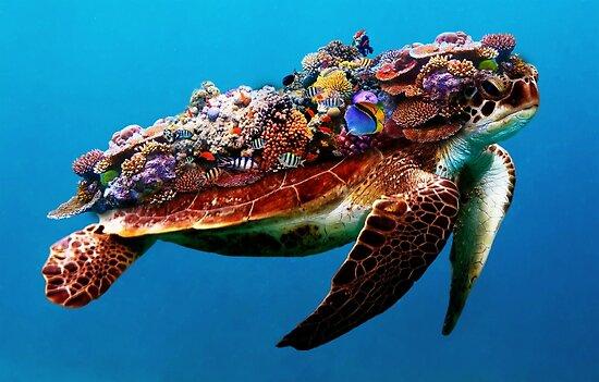 Sea Turtle by TortillaChief