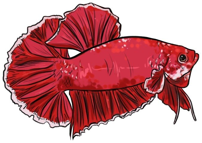 Betta Pink Plakat Sticker by Ashley Butera