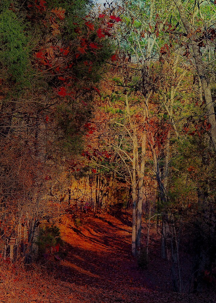 Red Carpet Trail by Mariann Kovats