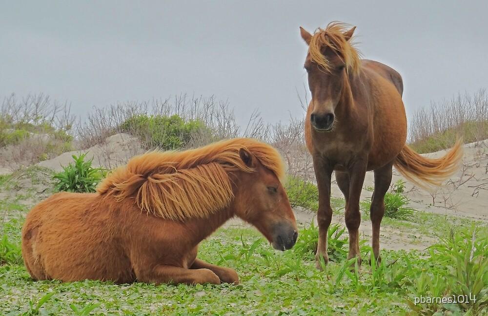 Assateague Island National Seashore Horses by pbarnes1014
